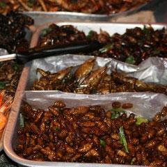 geröstete Kakerlaken und Maden
