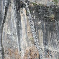 die Schwalbennester werden aus Höhen bis zu 90 m gesammelt.Hierbei kommt es auch sehr oft zu tödlichen Abstürzen,wei die Sammler ungesichert an solchen einfachen Bambusstangen weit nach oben klettern