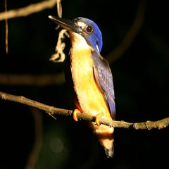verschiedene Tierarten am Daintree River