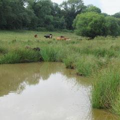 point d'eau dans les champs de la ferme de la Millanchère