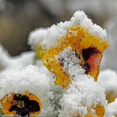 Philippe : Pensées de saison