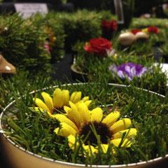 Tischgärten - recycelte Schraubdeckel (Foto Stephie Müller)