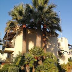 Bungalow, Grecotel Marine Palace, Kreta
