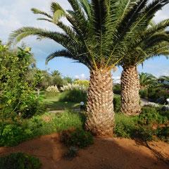 Gartenblick, Hotel Lyttos Beach, Kreta