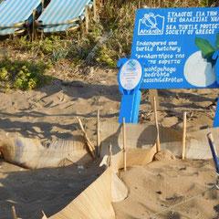 gesichertes Schildkrötennest, Am Strand von Rethymnon, Kreta