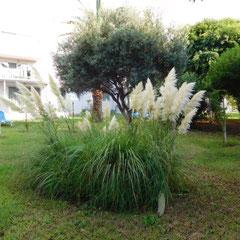Garten, Hotel Lyttos Beach, Kreta