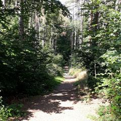 Wernigeröder Märchenweg im Wald, Wernigerode, Harz, Sachsen - Anhalt
