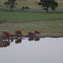 Elefanten am Wasserloch, Tsavo-Nationalpark, Kenia, Afrika