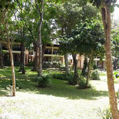 Garten, Hotel Baobab Beach Resort, Diani Beach, Südküste, Kenia, Afrika