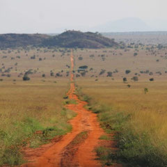 Safari, Tsavo-Nationalpark, Kenia, Afrika