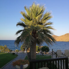 Blick zum Meer, Grecotel Marine Palace, Kreta