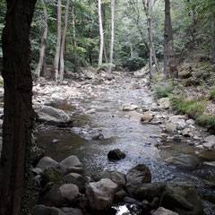 Ilsenburger Wald, Harz, Sachsen-Anhalt
