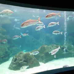 Fische, Aquarium, Kreta