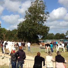 concours d'élevage de l'arrondissement de Coutances sur le site de la Fête