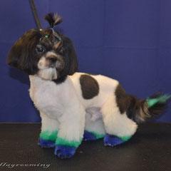 окрашивание профессиональными красками для собак
