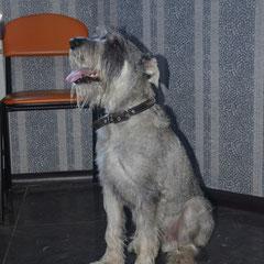 Миттель Макс на приеме у ветеринарного врача