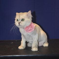 Кошка Маруся на стрижке