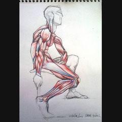 Dessin anatomique, crayon de couleurs sur format A3.