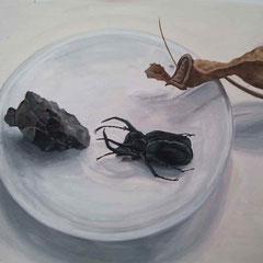 Etude documentaire d'une assiette, d'un scarabé, d'un caillou et d'une plante morte, gouache sur format demi-raisin ( 32.5x50cm ).