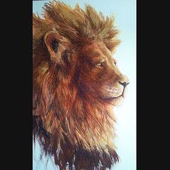 Etude documentaire de lion, gouache sur format A3.