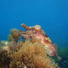 Mundo marino Mallorca Son Amoixa