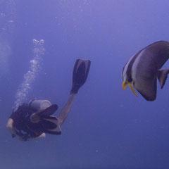 Underwater world Majorca Son Amoixa