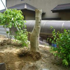 伐採 株の撤去 施工場所 奈良県北葛城郡王寺町