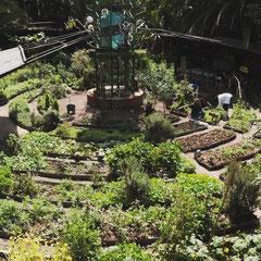 Agriculture urbaine au coeur de la ville de Mexico