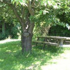 la table de pique-nique sous les cerisiers