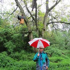 Behütet und beschirmt: Ein Schirm unter vier Nistbehausungen