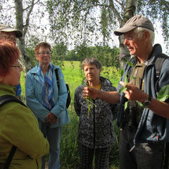 ... dann weiß er was zu präsentieren: Sumpfvergissmeinnicht, Ampferknöterich und Stachel-Lattich (Kompasspflanze)