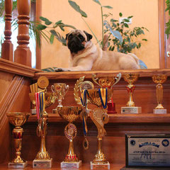 TEODORA FRIDERIKA FAYNA VARTA (2XБП-1, 2ХЛуч. щенок, BIS PUPPY-1,СС, КЧК, Победитель монопородной выставки, 6ХСАС, RCAC, RCACIB, 4XBOS, BOB, BIG-3, CH UA(Чемпион Украины)