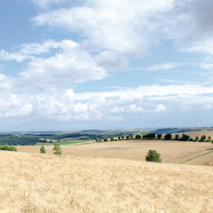 Vue sur la plaine lauragaise du côté de Villefranche Lauragais…