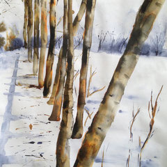 Tree study in winter