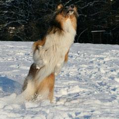 Crispy und die Schneeballjagd