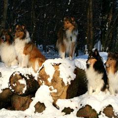 Fünf Freunde im Schnee <3