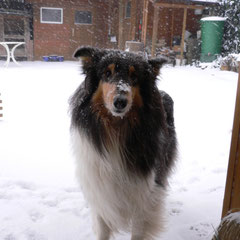 Louisa's Schneehase  ;-)
