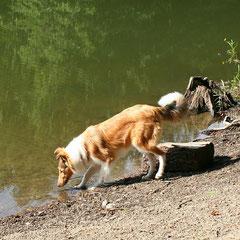 ... und Abkühlung im Wasser auch :)