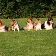 v. li.: Maya, Cleo, Boots, Crispy, Klara, Meggy