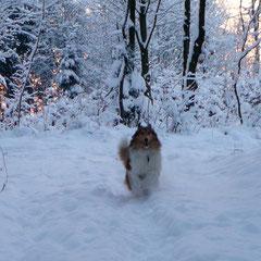 Meggy hat wie immer Spaß im Schnee; 18.12.2010