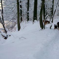 Märchenwald an der Wupper; 18.12.2010
