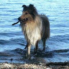 Lennox an der Ostsee