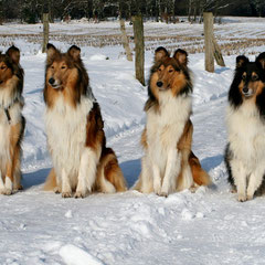 Aufmerksam aber brav abwartend schauen unsere vier Damen ihrem Freund Dany entgegen :)