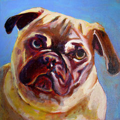 Charlie the Pug – FOR SALE $300.-