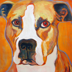 Pitbull 2 – FOR SALE $400.-