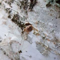 On perce un trou d'environ 3cm de profondeur à un mètre du sol