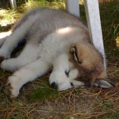 als Baby wird viel geschlafen