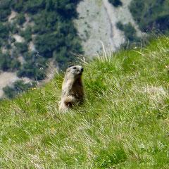 Auf dem Murtersattel lassen sich diverse Wildtiere beobachten, u.a. eine ganze Horde Murmeltiere.