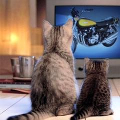 Même les chats kiffent la Z !!!....