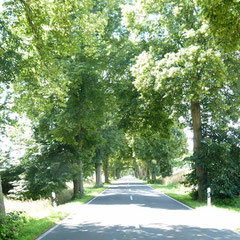 Straße Richtung Priepert